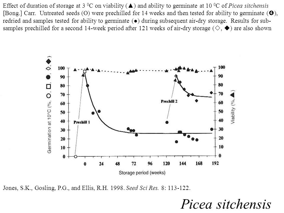 Effect of duration of storage at 3 0C on viability (▲) and ability to germinate at 10 0C of Picea sitchensis [Bong.] Carr. Untreated seeds () were prechilled for 14 weeks and then tested for ability to germinate (), redried and samples tested for ability to germinate (●) during subsequent air-dry storage. Results for sub-samples prechilled for a second 14-week period after 121 weeks of air-dry storage (, ) are also shown